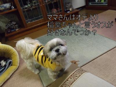 繝・ず繧ォ繝。+1177_convert_20100214150843