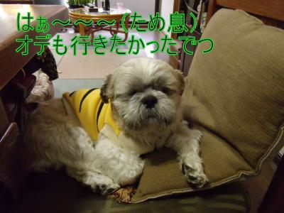 繝・ず繧ォ繝。+158_convert_20100316024055