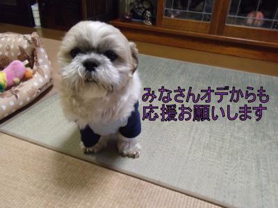 繝・ず繧ォ繝。+198_convert_20100325020147