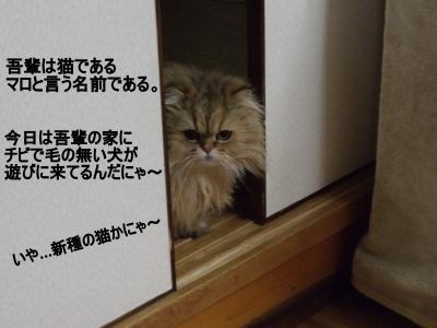 繝・ず繧ォ繝。+272_convert_20100328034442