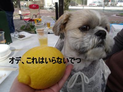 繝・ず繧ォ繝。+554_convert_20100405031221