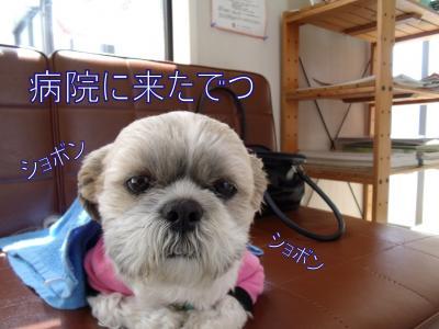 繝・ず繧ォ繝。+602_convert_20100419163444