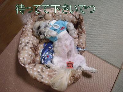 繝・ず繧ォ繝。+611_convert_20100429134206