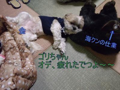 繝・ず繧ォ繝。+702_convert_20100503233026