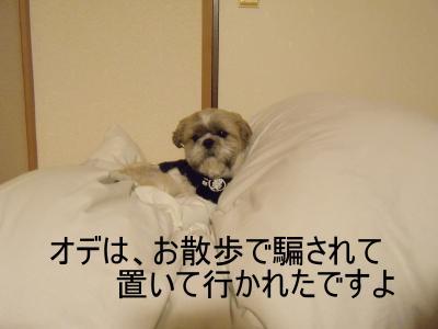 繝・ず繧ォ繝。+664_convert_20100515010846
