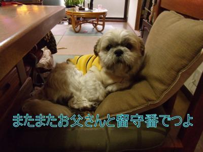 繝・ず繧ォ繝。+152_convert_20100317013111