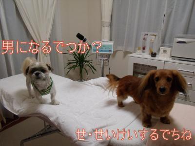 繝・ず繧ォ繝。+894_convert_20100531001755