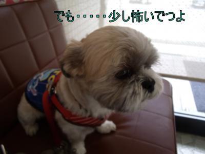 繝・ず繧ォ繝。+944_convert_20100612010435
