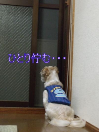 繝・ず繧ォ繝。+947_convert_20100613203939
