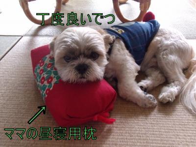 繝・ず繧ォ繝。+963_convert_20100615152607