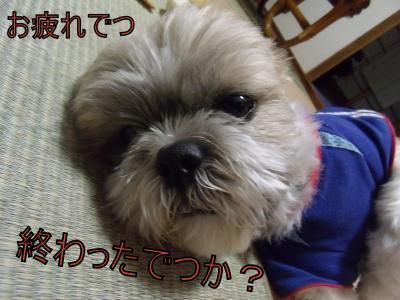 繝・ず繧ォ繝。+982_convert_20100619214640