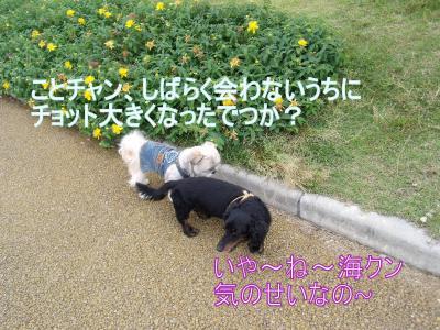 繝・ず繧ォ繝。+935_convert_20100712214159