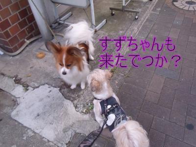 繝・ず繧ォ繝。+1108_convert_20100724215232