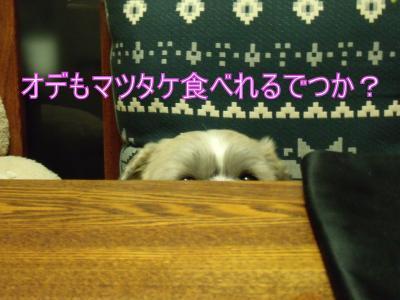 繝・ず繧ォ繝。+1096_convert_20100729212407