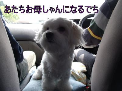 繝・ず繧ォ繝。+706_convert_20100814005029