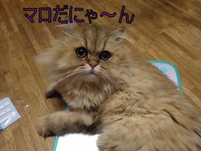 繝・ず繧ォ繝。+1123_convert_20100814004705