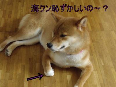 繝・ず繧ォ繝。+1124_convert_20100814004813