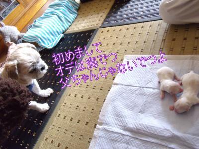 繝・ず繧ォ繝。+1192_convert_20100819215919