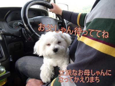 繝・ず繧ォ繝。+746_convert_20100825214501