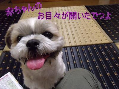 繝・ず繧ォ繝。+1114_convert_20100829205632
