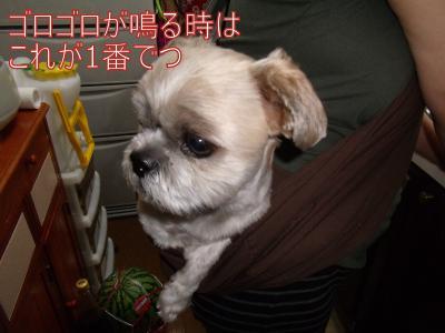 繝・ず繧ォ繝。+1250_convert_20100831000356