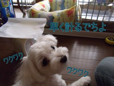 繝・ず繧ォ繝。+1246_convert_20100831011150