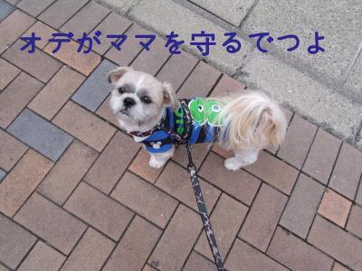 ・搾シ魯SCF5810_convert_20101006023234