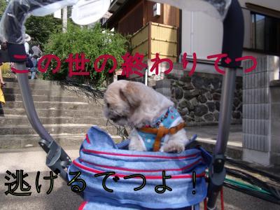 ・搾シ疋SCF5871_convert_20101009162219
