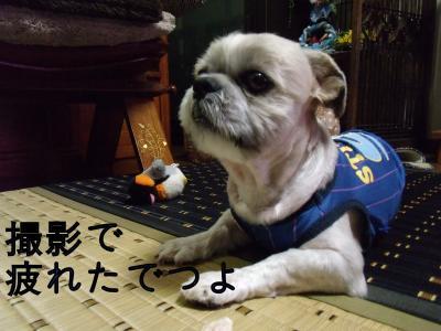・搾シ泥SCF5318_convert_20101014012603