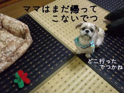 ・搾シ縫SCF5775_convert_20101023041037