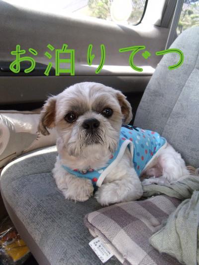 ・搾シ泥SCF6089_convert_20101026011031