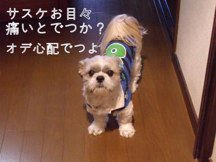 ・搾シ疋SCF6284_convert_20101102003631