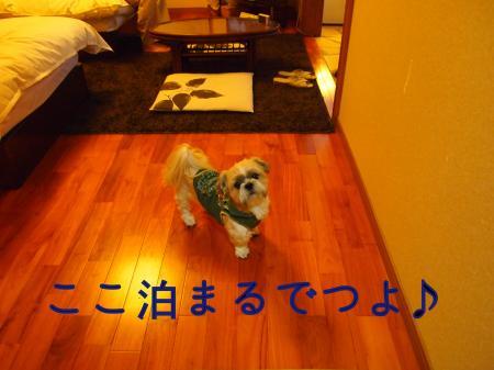 ・搾シ捻B070056_convert_20101114021057