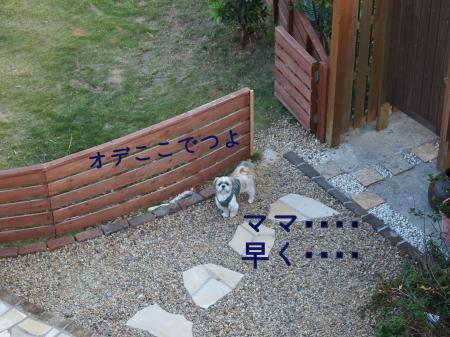 ・搾シ姫B070024_convert_20101114021817