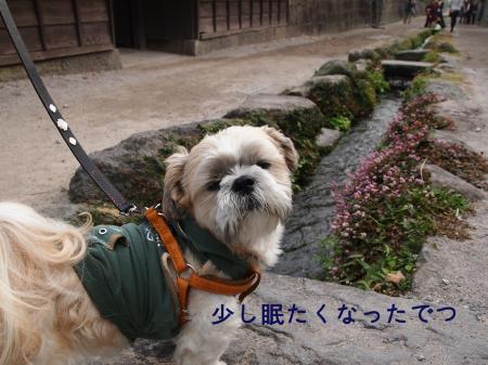 ・搾シ鳳B080154_convert_20101119021459