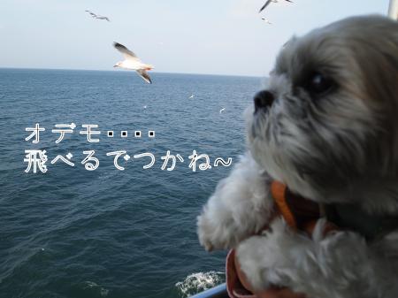 ・搾シ鳳B080176_convert_20101119021935