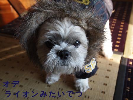 ・搾シ捻B200237_convert_20101123014345