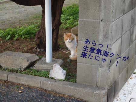 ・搾シ儕B140194_convert_20101126015751