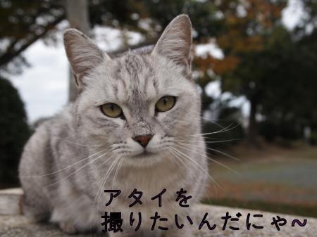 ・搾シ捻B230301_convert_20101126153734