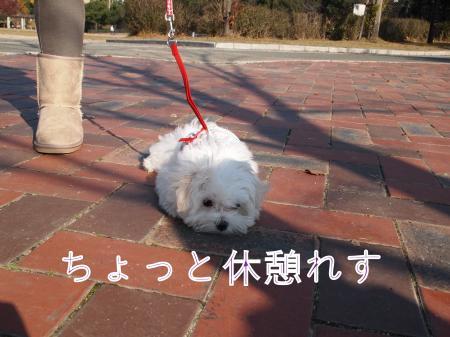 ・搾シ捻B210263_convert_20101128032315