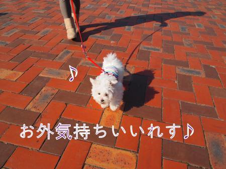 ・搾シ猶B210248_convert_20101128032334