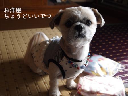 ・搾シ姫B280337_convert_20101130033539