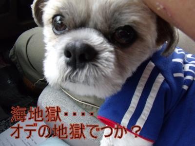DSCF4658_convert_20100705013301.jpg