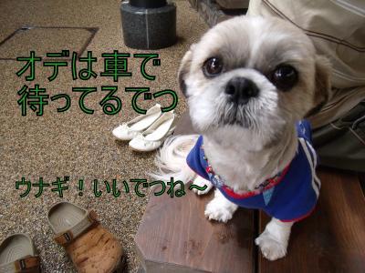 DSCF4679_convert_20100704024836.jpg