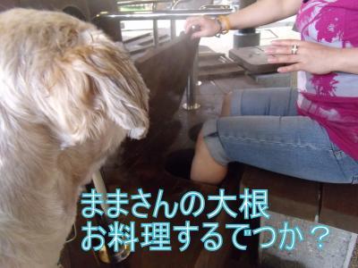 DSCF4685_convert_20100702014635.jpg