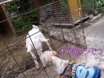 DSCF5114_convert_20100804015909.jpg