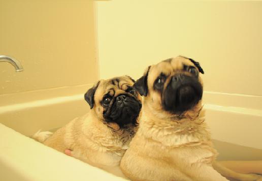 しんのらお風呂