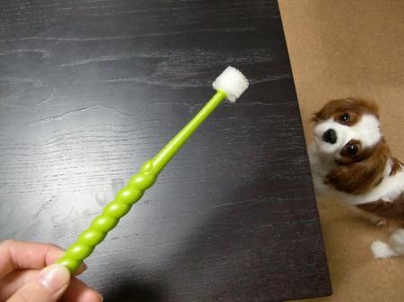たんぽぽ歯ブラシ!