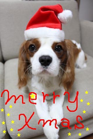 merry xmas♪