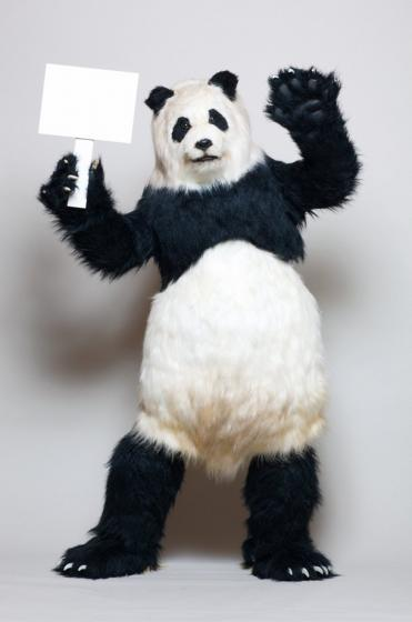 news_large_panda.jpg